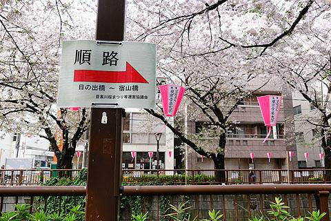 Sakura-03.jpg