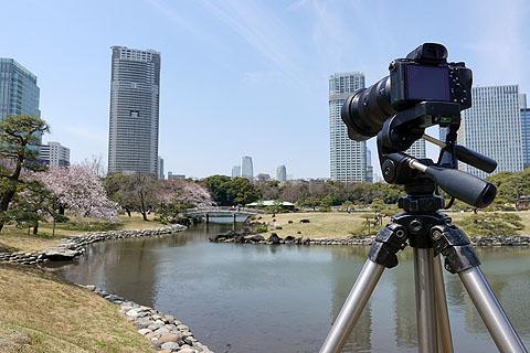 Sakura-06.jpg