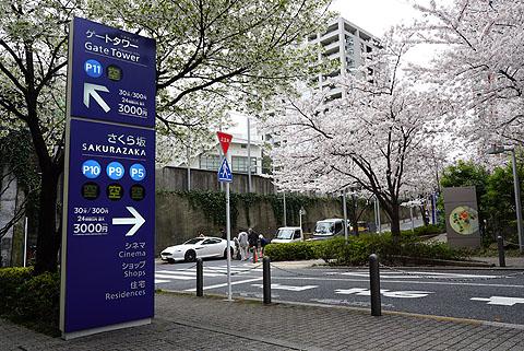 Sakura-08.jpg