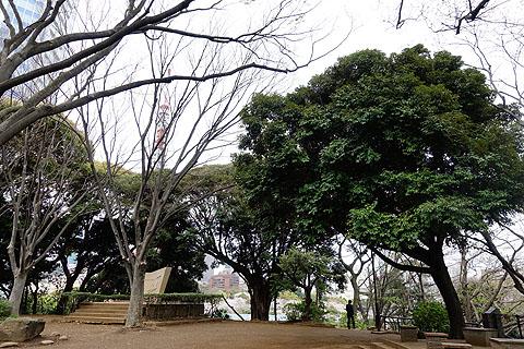 Sakura-11.jpg