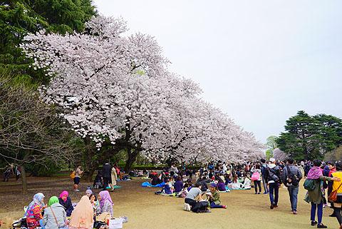 Sakura-13.jpg