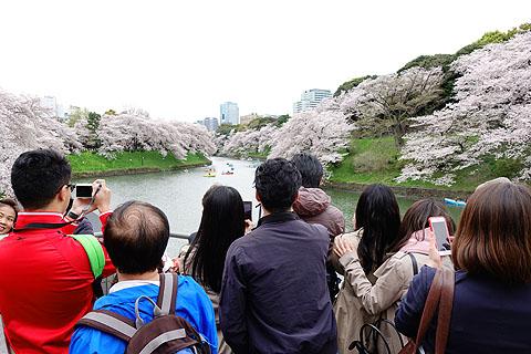 Sakura-15.jpg
