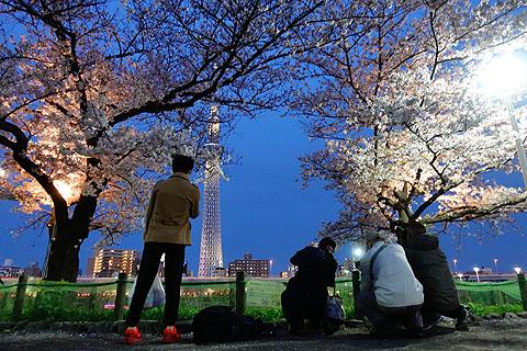 Sakura-19.jpg
