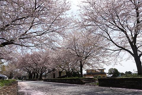 tsukuba-rinrin-07.jpg