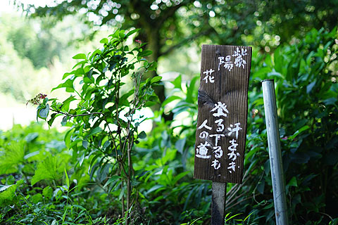 yamanosusume-32.jpg